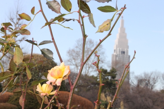 Some of the roses didn't get the memo that it was January.