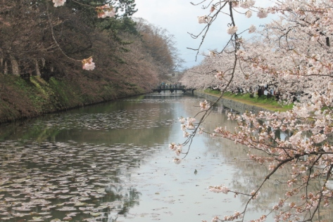 The moat around Hirosaki Castle Park serves as a perfect makeshift mirror.
