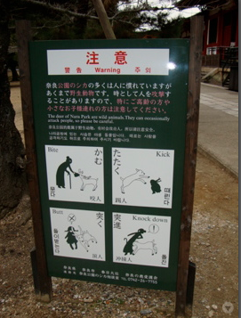 Beware when interacting with the deer... From the famous park in Nara. (Also known as the spot where the deer are so friendly that you feel like a Disney princess.)