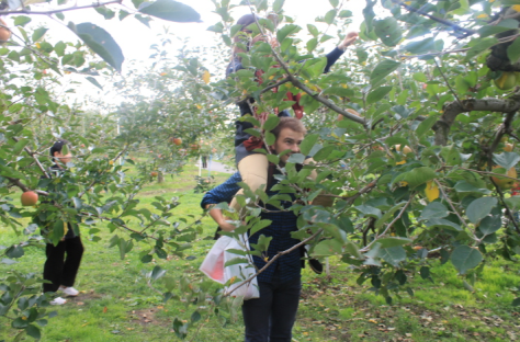 Getting resourceful to reach the pristine apples just out of our grasp.
