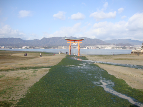 The torii at low tide