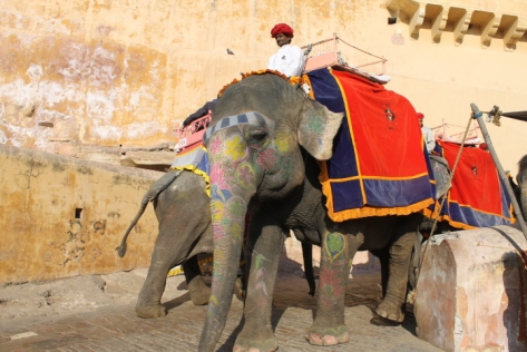 One of the signs of a healthy elephant is the tough, bristly hair that covers them. Amber Fort elephants? No hair to be seen. Not to mention the fact that the gaudy seats and outfits of the mahouts (riders) are tailored for tourists.