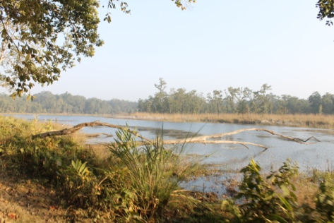 Tiger Lake in Chitwan National Park