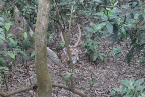 Morning, Bambi.