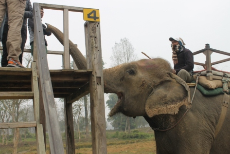 This is how to properly tip a mahout: hand the money off to the elephant.