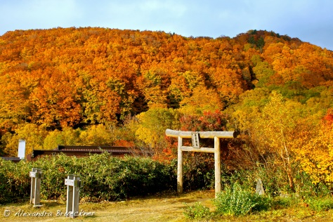 The torii near Sukayu Onsen, near the Shirakami mountain range.