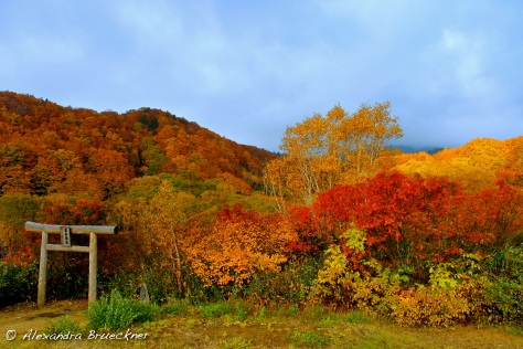 "紅葉 (kouyou) means ""autumn foliage"" in Japanese, and Aomori's got it in spades."
