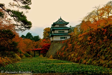 Hirosaki Castle, during the park's annual chrysanthemum and fall foliage festival.